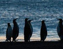 Pingüinos de rey que miran la subida del sol imagen de archivo libre de regalías