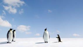 Pingüinos del emperador y de Adelie Fotos de archivo