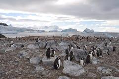 Pingüinos en Ant3artida Fotografía de archivo