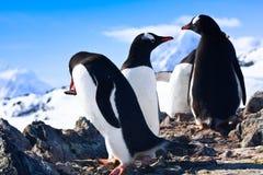 Pingüinos en Ant3artida Imágenes de archivo libres de regalías