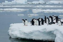 Pingüinos en el hielo. Fotografía de archivo