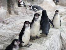 Pingüinos en el hielo de la nieve Imagenes de archivo