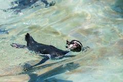 Pingüinos en Hay Park en Kiryat Motzkin, Israel Imágenes de archivo libres de regalías