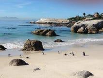 Pingüinos en la playa Foto de archivo libre de regalías