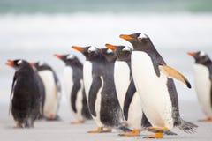 Pingüinos en la playa con el mar azul en fondo Imagen de archivo libre de regalías