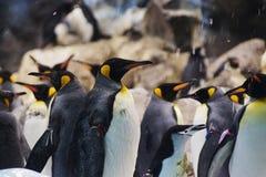 Pingüinos en parque zoológico Imagenes de archivo
