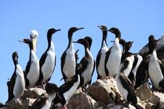 Pingüinos en rocas Fotos de archivo