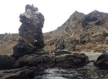 Pingüinos. Islas damas chile Royalty Free Stock Photo