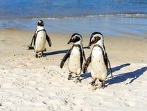 Pingüinos junto en una playa imagenes de archivo