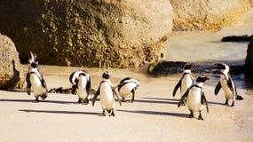 Pingüinos lindos Fotografía de archivo libre de regalías