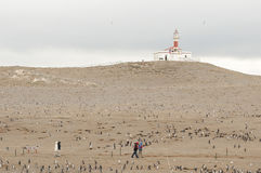 Pingüinos - Magdalena Island - Chile fotos de archivo libres de regalías