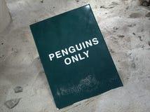 Pingüinos solamente Imagenes de archivo