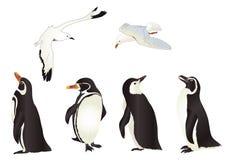 Pingüinos y gaviotas Foto de archivo