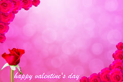 Ping background and rose on Valentine's Day, frame Stock Photography