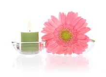 Ping Gerbera and Aromatic Candles Stock Photo