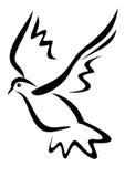 Pingeon, duif Royalty-vrije Stock Afbeeldingen