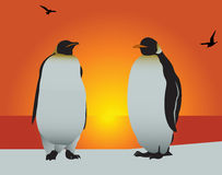 Pingüino. Amor Imagen de archivo