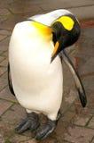 Pingüino real Foto de archivo libre de regalías