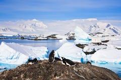 Pingüinos en Ant3artida Fotografía de archivo libre de regalías