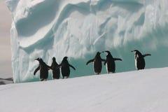 Pingüinos en el iceberg Foto de archivo libre de regalías