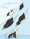 Pingüinos que resbalan cuesta abajo Imágenes de archivo libres de regalías