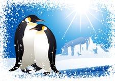 Pingüinos y marco del copo de nieve Imágenes de archivo libres de regalías