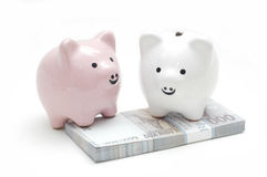 Pingky White Piggy Bank Stock Photo