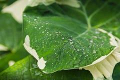 Pingo de chuva, na folha verde imagens de stock