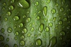 Pingos de chuva Imagem de Stock Royalty Free