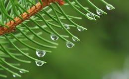 Pingos de chuva Foto de Stock