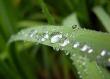 Pingos de chuva Imagens de Stock