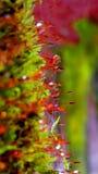 Pingos de chuva da floresta Foto de Stock