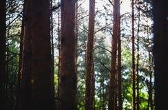 Pingos de chuva e luz do sol na floresta Imagens de Stock Royalty Free