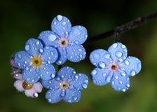Pingos de chuva em flores Imagem de Stock