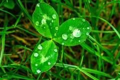 Pingos de chuva em um close-up verde da folha Gotas da água em um macro da planta verde Fotografia de Stock