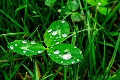 Pingos de chuva em um close-up verde da folha Gotas da água em um macro da planta verde Foto de Stock Royalty Free