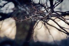 Pingos de chuva em um ramo de árvore desencapado no inverno fotos de stock royalty free