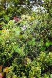 Pingos de chuva em um spiderweb em um dia nublado e nevoento nos promontório, área de recreação nacional do Golden Gate, Marin Co imagem de stock