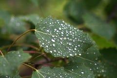 Pingos de chuva em uma folha Imagem de Stock Royalty Free