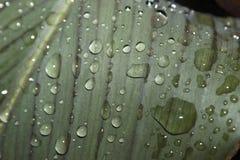 Pingos de chuva em uma folha Fotos de Stock