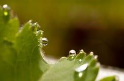 Pingos de chuva em uma folha Foto de Stock Royalty Free