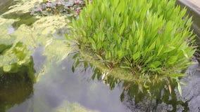Pingos de chuva em uma lagoa no dia cinzento chuvoso com humor fresco verde da melancolia do arbusto vídeos de arquivo