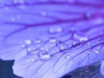 Pingos de chuva em uma pétala Fotografia de Stock Royalty Free
