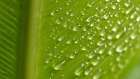 Pingos de chuva empoleirados em uma samambaia grande Imagens de Stock