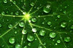 Pingos de chuva frescos em uma folha Fotografia de Stock Royalty Free