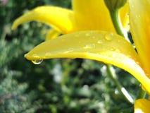 Pingos de chuva na flor Imagem de Stock
