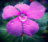 Pingos de chuva na flor foto de stock