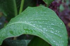 Pingos de chuva na folha Fotos de Stock