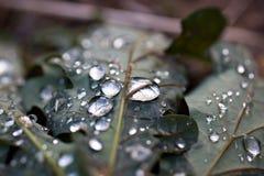 Pingos de chuva na folha imagem de stock royalty free