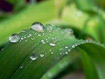 Pingos de chuva na folha verde no macro fotografia de stock royalty free